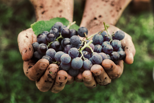 Is It Better To Drink Organic Wine Over Conventional? Here's 4 Reasons Why You Should Be.