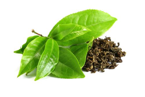 fresh and dried green tea