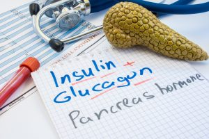 insulin and glycogen with model of pancreas